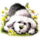 Kuža  v travi ( 12 x 10,5 cm. )